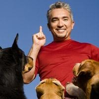 Billet Cesar Millan - L'homme qui parle aux chiens