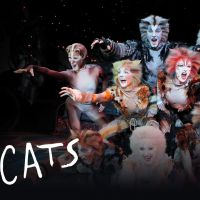 Buy your Cats tickets
